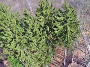 Neuer Baumwipfelpfad im Steigerwald