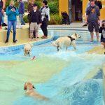 Hundebadetag: Vierbeiner planschen in Freibad