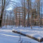 Der Baumwipfelpfad im Steigerwald boomt - auch im Winter