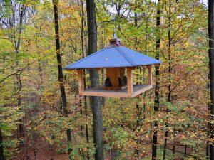Herbst-im-Steigerwald