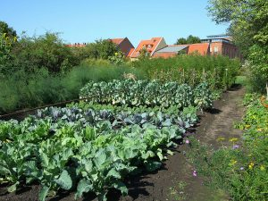 Gartenbauprämie