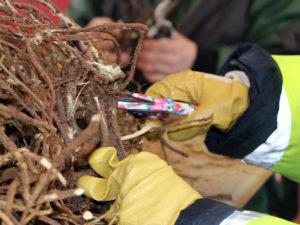 Die Gartengruppe Süßholz bei der Arbeit