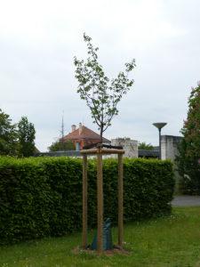 Wunschbaum der Bürgerschaft