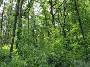 Biodiversitaet_Bruderwald
