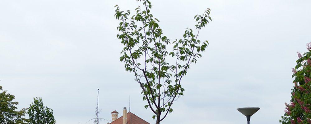 Wunschbaum der Bürgerschaft wächst und gedeiht