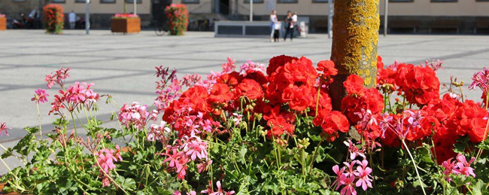 Gartenamt sorgt für Blumenpracht