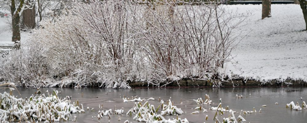 Ab aufs Eis: Bamberg gibt vier stehende Gewässer frei