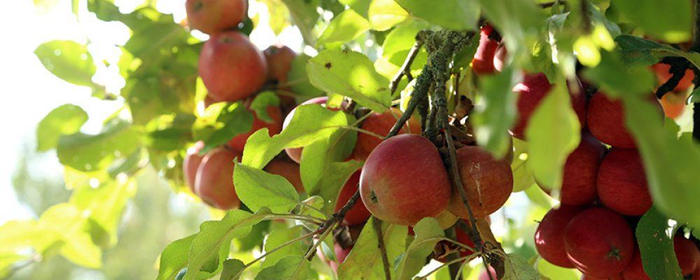 Frisches Obst regional einkaufen