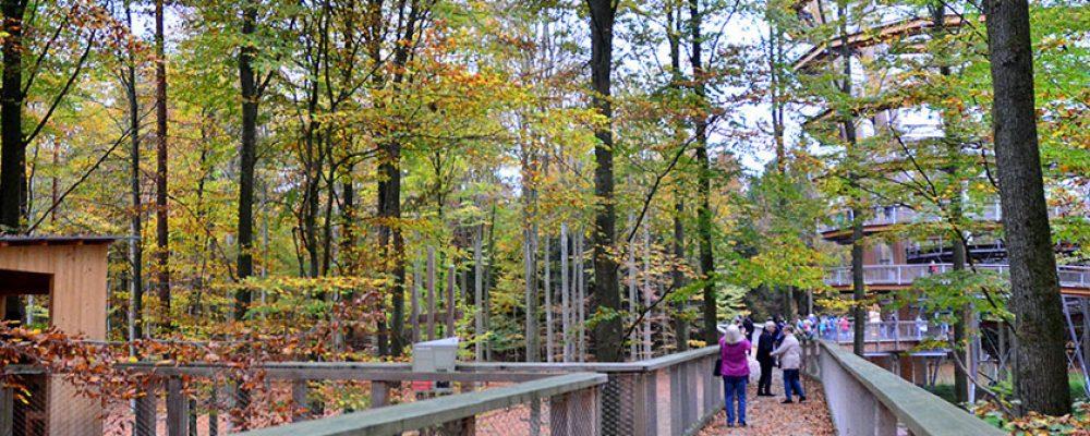 Farbenfrohes Naturspektakel im Steigerwald