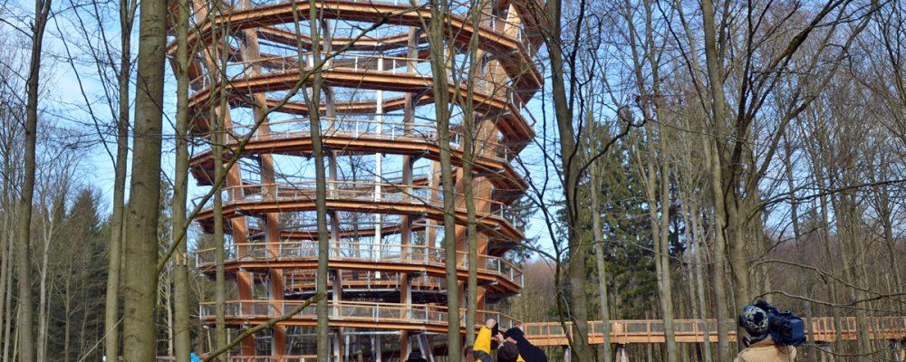 Neuer Baumwipfelpfad im Steigerwald bald geöffnet