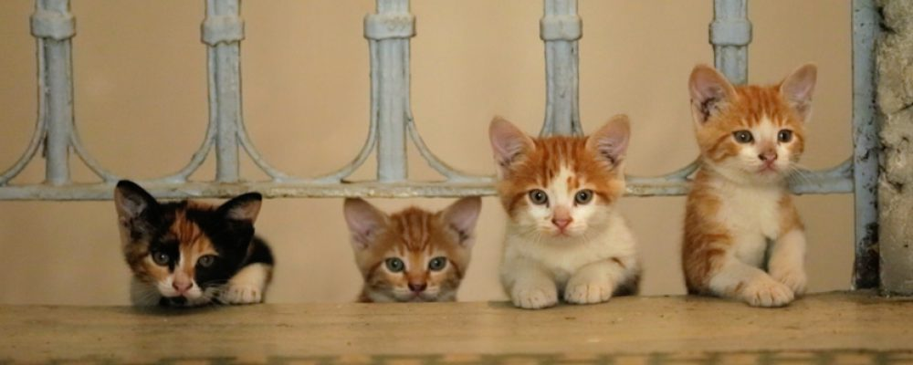 Gewinnspiel zum Heimkino-Release: KEDI – Von Katzen und Menschen