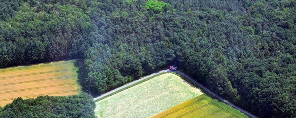 Immense Waldbrandgefahr in und um Bamberg