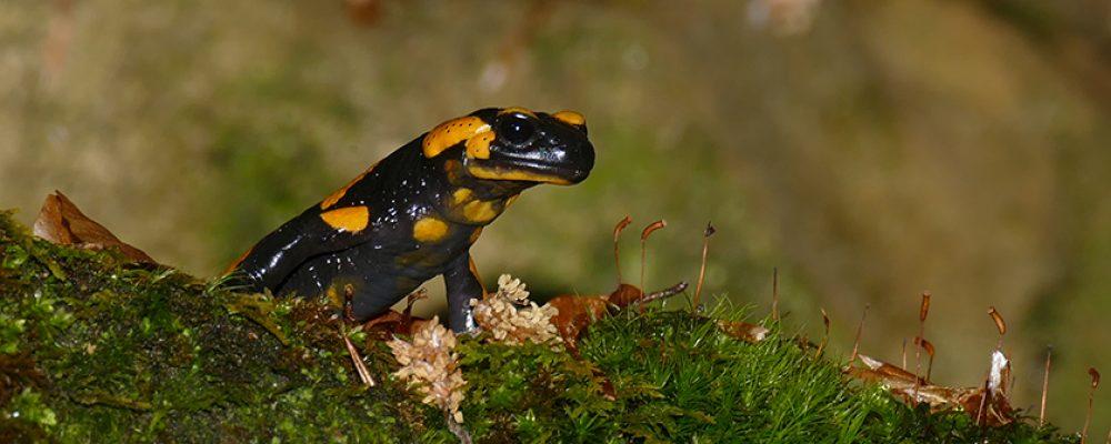 Artenkenner auf der Roten Liste