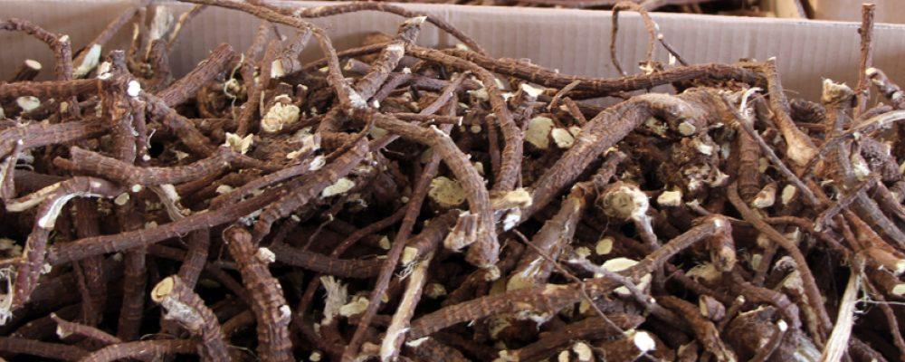 Lebenshilfe raspelt Süßholz