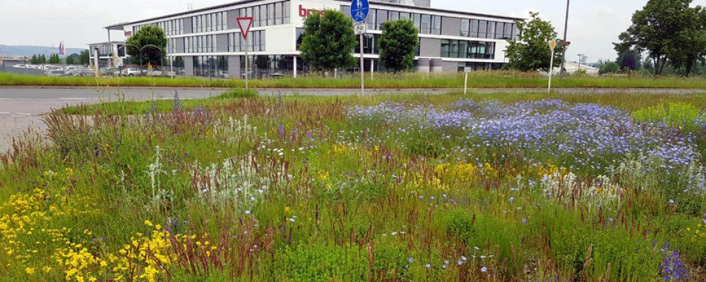 Blütenpracht am Berliner Ring