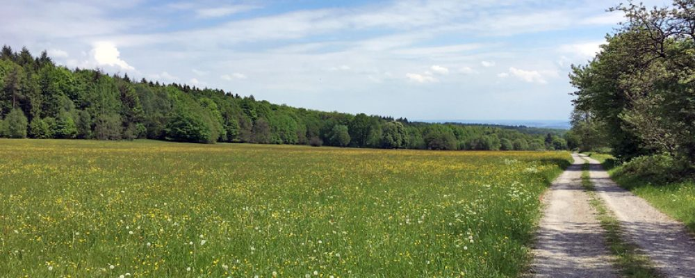 200 Kilometer zu Fuß: Von Frankfurt nach Bamberg in acht Tagen