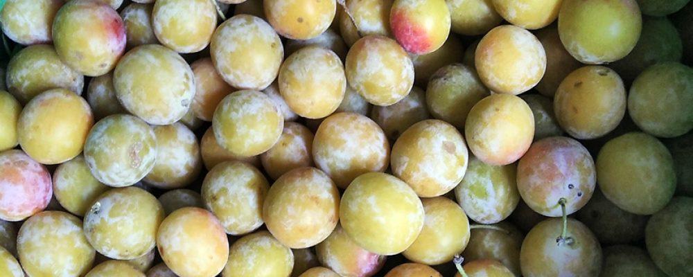 Früchte der heimischen Wiesen