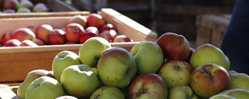 Apfelmarkt in Memmelsdorf erst 2021