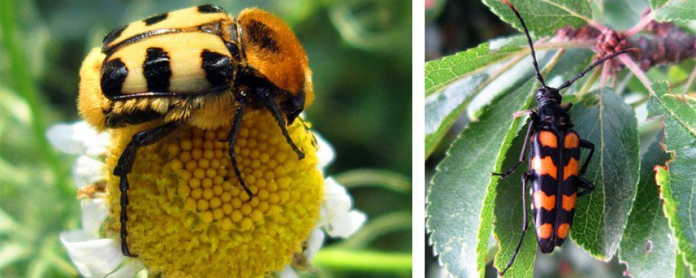 """""""Insekten – Lieben Wir Auch!"""""""