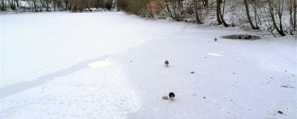 Trotz Dauerfrost: Eisflächen auf unseren Weihern sind noch nicht tragfähig!
