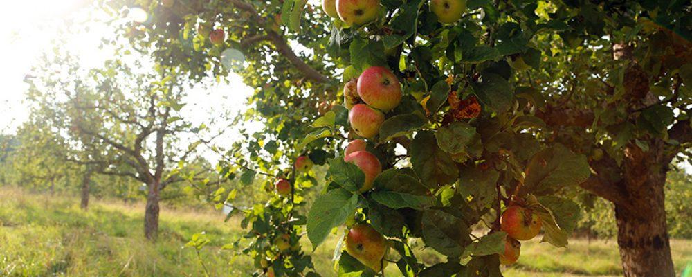 """""""Gartengespräche"""" im goldenen Herbst"""